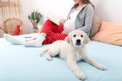 Donna incinta con il suo cane a casa Immagini Stock Libere da Diritti