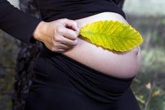 Donna incinta con una foglia Fotografia Stock