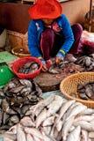 Donna khmer che vende il mercato del pesce Siem Reap, Cambogia Fotografia Stock