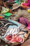 Donna khmer che vende il mercato del pesce Siem Reap, Cambogia Fotografie Stock Libere da Diritti