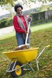 Donna matura che raccoglie i fogli in giardino Fotografia Stock