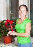 Donna matura con i fiori del Poinsettia Immagini Stock Libere da Diritti