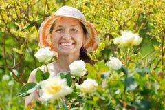 Donna matura felice nella pianta delle rose immagine stock