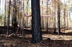 Donna nascosta dietro un albero immagine stock