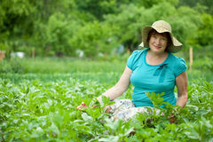 Donna nel campo della patata fotografie stock