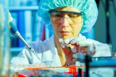 Donna nel laboratorio di microbiologia Fotografia Stock Libera da Diritti