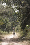 Donna nella foresta in Tafi Atome nella regione del Volta nel Ghana Fotografie Stock