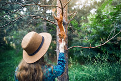 Donna nello scoiattolo d'alimentazione del cappello in foresta Immagini Stock