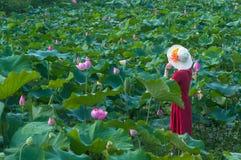 Donna nello stagno di loto Fotografia Stock Libera da Diritti