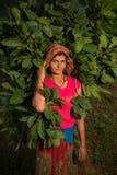 Donna nepalese che raccoglie, Doru, valle di Huwas, Nepal fotografia stock libera da diritti