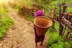 Donna nepalese con il canestro di vimini Immagine Stock