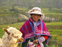 Donna peruviana anziana e la sua alpaga Fotografia Stock Libera da Diritti