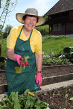 Donna più anziana nel suo giardino Fotografia Stock Libera da Diritti