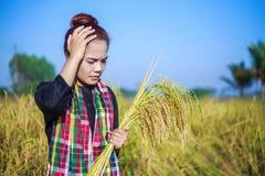 Donna preoccupata dell'agricoltore nel giacimento del riso Immagine Stock