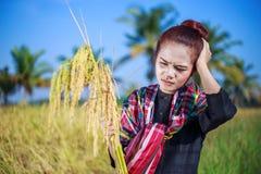 Donna preoccupata dell'agricoltore nel giacimento del riso Immagine Stock Libera da Diritti