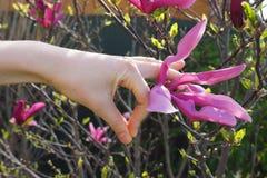 donna reale della mano del pianeta Terra di energia di vita delle piante della flora di estate della molla di realtà di resto di  Fotografie Stock Libere da Diritti