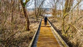 Donna senior che fa un'escursione la traccia dal pioppo Antivari al due bit Antivari in Glen Valley Regional Park vicino a Langle immagine stock libera da diritti