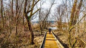 Donna senior che fa un'escursione la traccia dal pioppo Antivari al due bit Antivari in Glen Valley Regional Park vicino a Langle immagine stock