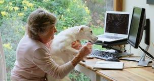 Donna senior che gioca con il suo cane 4k archivi video