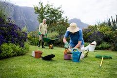 Donna senior che pianta fiore mentre uomo senior che sta con la carriola nel fondo Immagini Stock