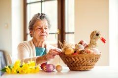 Donna senior che sistema canestro con le uova di Pasqua ed i narcisi Fotografia Stock Libera da Diritti