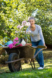 Donna senior che spinge carriola in giardino Immagini Stock Libere da Diritti