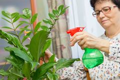 Donna senior che spruzza una pianta con acqua pura da una bottiglia dello spruzzo Fotografie Stock Libere da Diritti