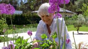 Donna senior con il pruner ed i fiori del giardino archivi video