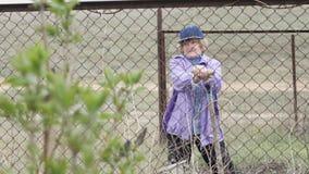 Donna senior felice che lavora in giardino e terra di scavatura archivi video