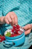 Donna senior in suoi giardino e ribes nostrani Fotografia Stock
