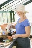 Donna in serra che mette terreno in POT Fotografia Stock Libera da Diritti
