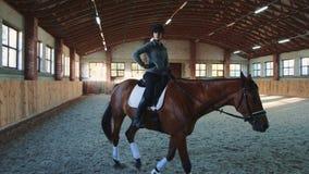 Donna sul cavallo che cammina lentamente sull'arena stock footage