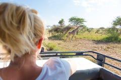 Donna sul safari africano della fauna selvatica osservando giraffa pascere nella savana dalla jeep aperta di safari del tetto fotografia stock libera da diritti