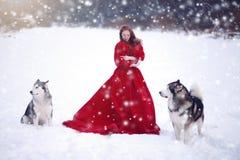 Donna sul vestito rosso con i cani immagine stock