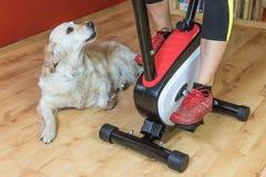 Donna sulla bici di esercizio con un cane bianco Immagini Stock