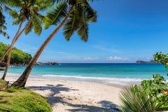 Donna sulla spiaggia tropicale fotografia stock libera da diritti