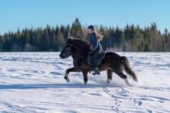 Donna svedese che monta il suo cavallo islandese in neve profonda fotografia stock