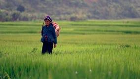 Donna tailandese della tribù nel giacimento del riso immagine stock libera da diritti