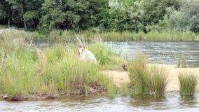 Donna teenager caucasica che prende telefonata all'aperto dal fiume in body bianco video d archivio