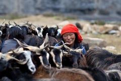 Donna tibetana con il gregge delle capre Fotografia Stock Libera da Diritti