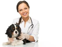 Donna veterinaria con lo spaniel immagine stock