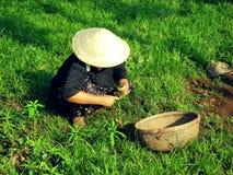 Donna vietnamita Fotografie Stock