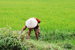 Donna vietnamita Fotografia Stock Libera da Diritti