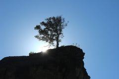 Donnas Baum Stockbild