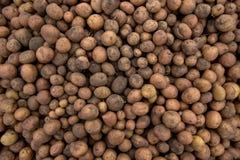 Donne à l'abondance une consistance rugueuse des pommes de terre fraîches avec le sol sur f moissonné par coquille Image stock
