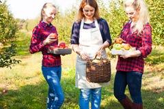 Donne adorabili in un giardino soleggiato della mela fotografia stock libera da diritti