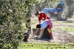 Donne agricoltori durante la campagna di oliva in un campo di oliva t Immagine Stock Libera da Diritti