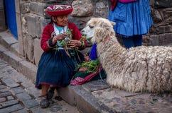 Donne anziane nell'alpaga d'alimentazione del vestito tradizionale in Pisac, Perù Fotografia Stock Libera da Diritti