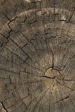 Donne au chêne une consistance rugueuse d'arbre Photo stock