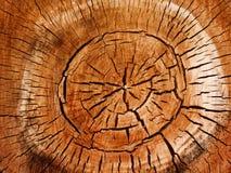 Donne au peuplier une consistance rugueuse d'arbre Image stock